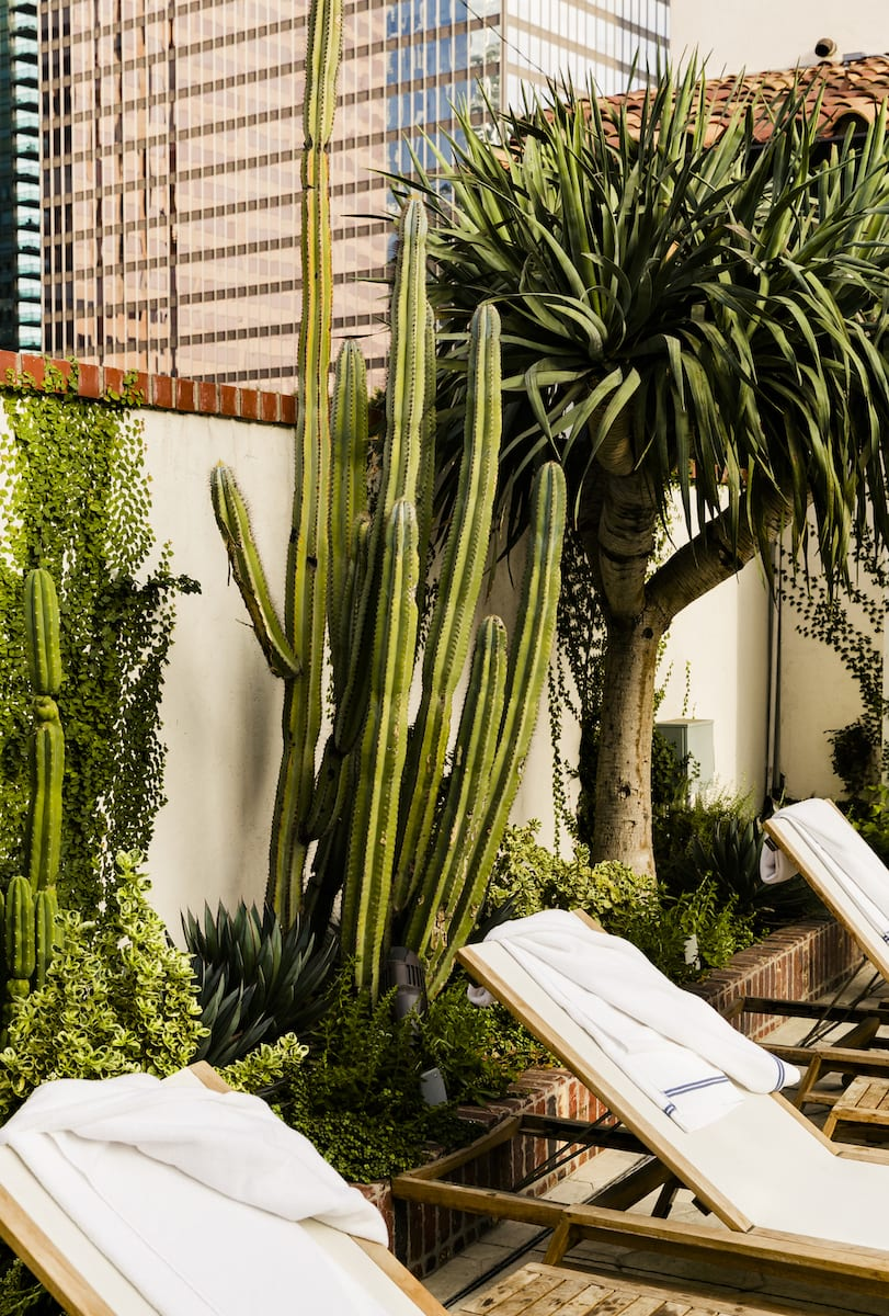 lounge chairs outdoors and cactuses